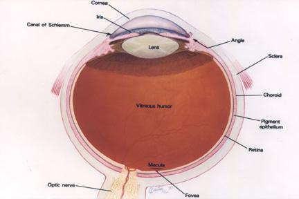 ¿Que resolución tienen nuestros ojos?